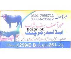Mehar Asif Beaf Shop Burewala